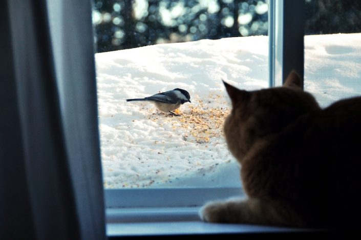 Cat looking through window at bird