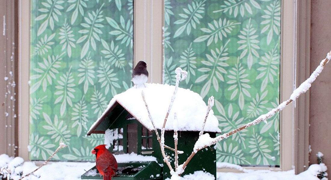 Homes Safe For Birds – BirdSafe